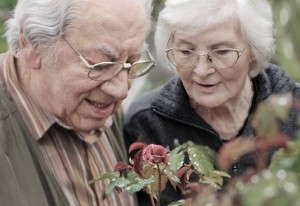 Senior couple looking to a rose after rain, outdoors